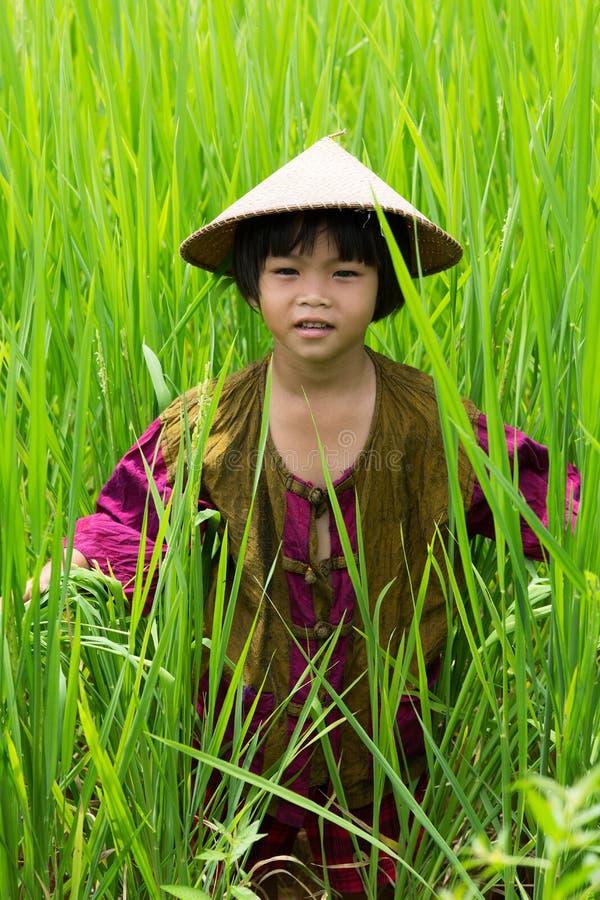 Muchacha asiática en arroz de arroz imagen de archivo libre de regalías