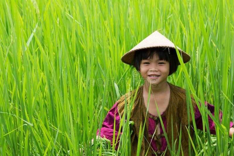Muchacha asiática en arroz de arroz imagenes de archivo