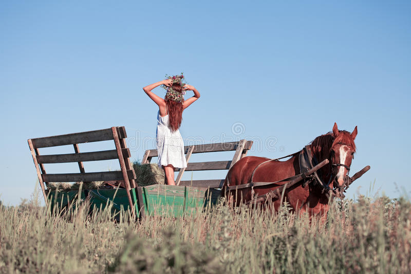 Muchacha bonita con los wildflowers en el carro del caballo en día de verano foto de archivo libre de regalías