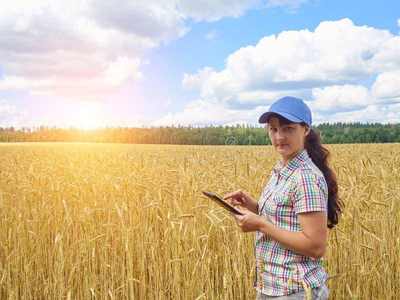Muchacha bonita joven del granjero que se coloca en campo de trigo amarillo foto de archivo libre de regalías