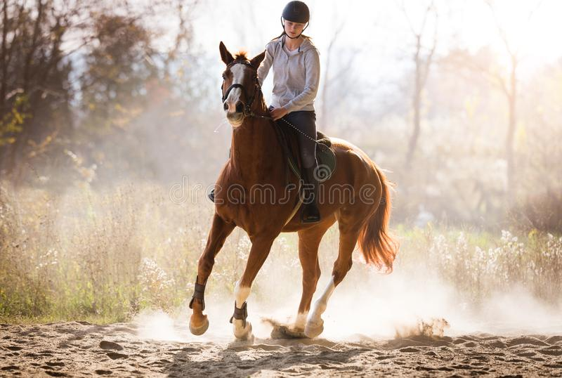 Muchacha bonita joven - montando un caballo con las hojas retroiluminadas detrás imágenes de archivo libres de regalías