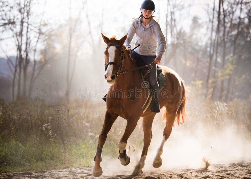 Muchacha bonita joven - montando un caballo con las hojas retroiluminadas detrás fotografía de archivo