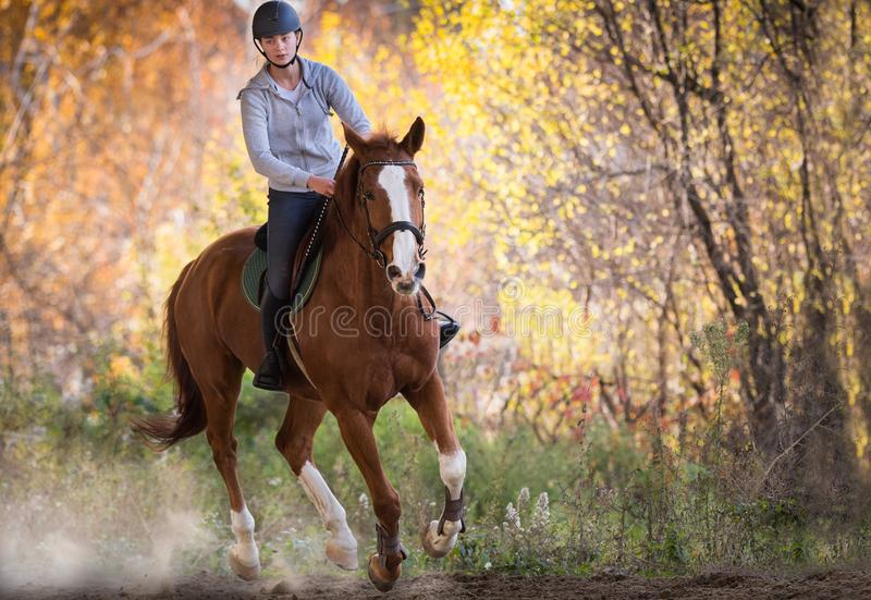Muchacha bonita joven - montando un caballo con las hojas retroiluminadas detrás fotografía de archivo libre de regalías