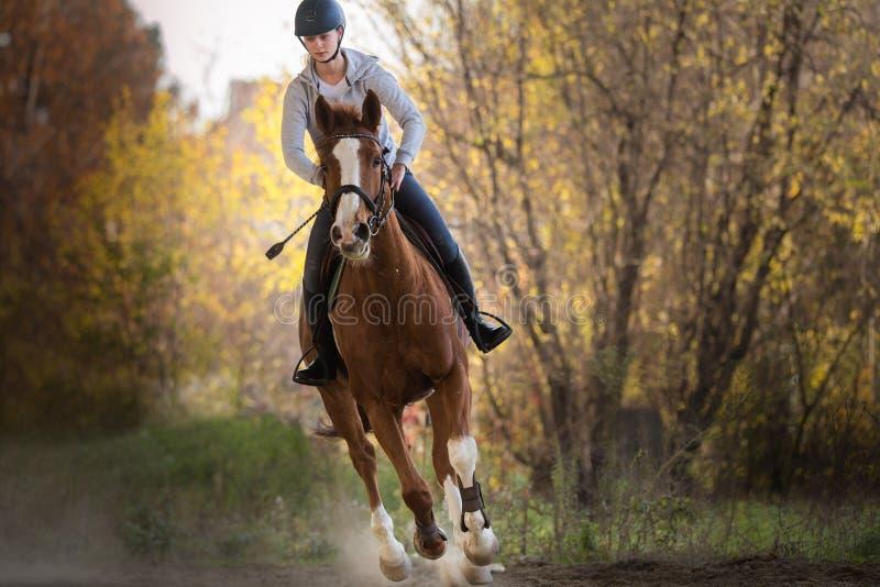 Muchacha bonita joven - montando un caballo con las hojas retroiluminadas detrás foto de archivo