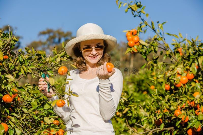 Muchacha caucásica que cosecha los mandarines y las naranjas adentro foto de archivo