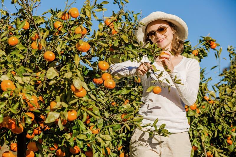 Muchacha caucásica que cosecha los mandarines y las naranjas adentro imagen de archivo libre de regalías