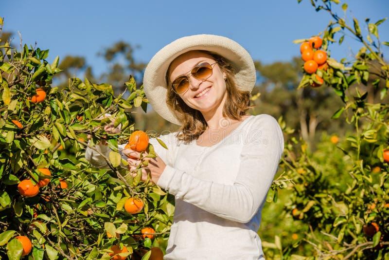 Muchacha caucásica que cosecha los mandarines y las naranjas adentro fotos de archivo libres de regalías