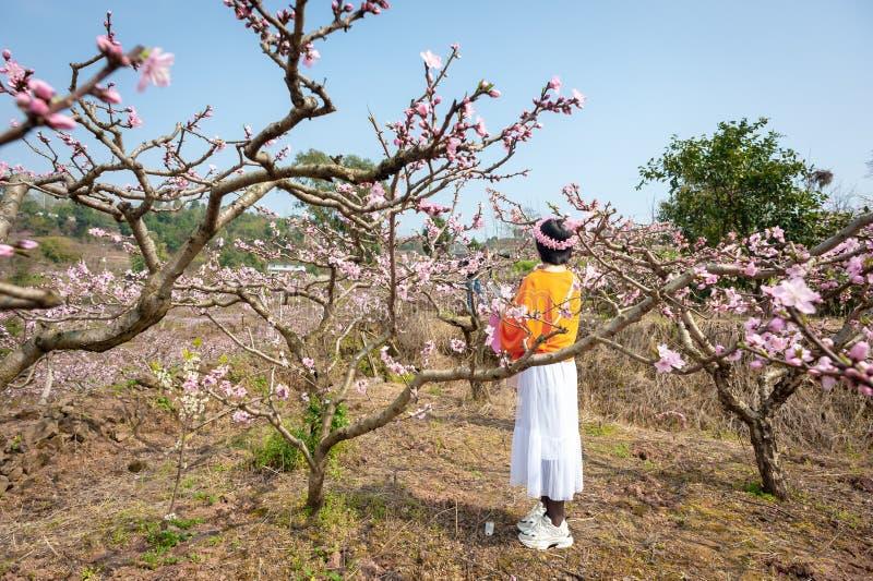 Muchacha china con una corona de la flor que goza de árboles del flor del melocotón fotos de archivo libres de regalías