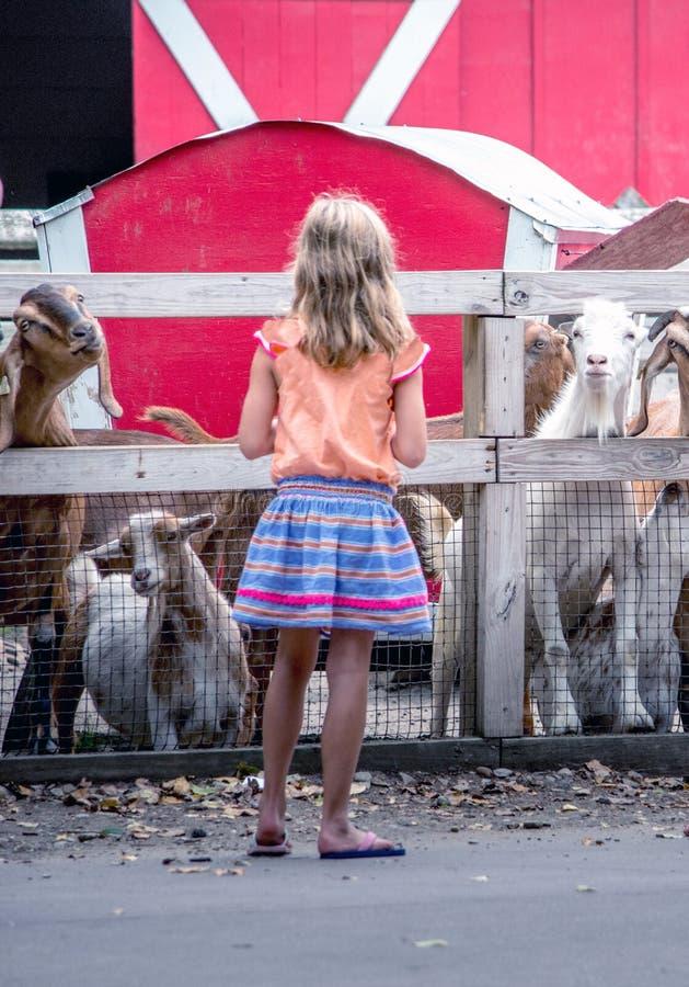 Muchacha con el paquete de cabras fotografía de archivo libre de regalías