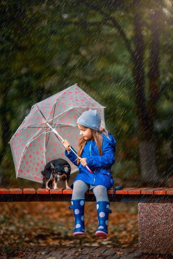 Muchacha con el perro de la chihuahua en parque del otoño fotografía de archivo libre de regalías