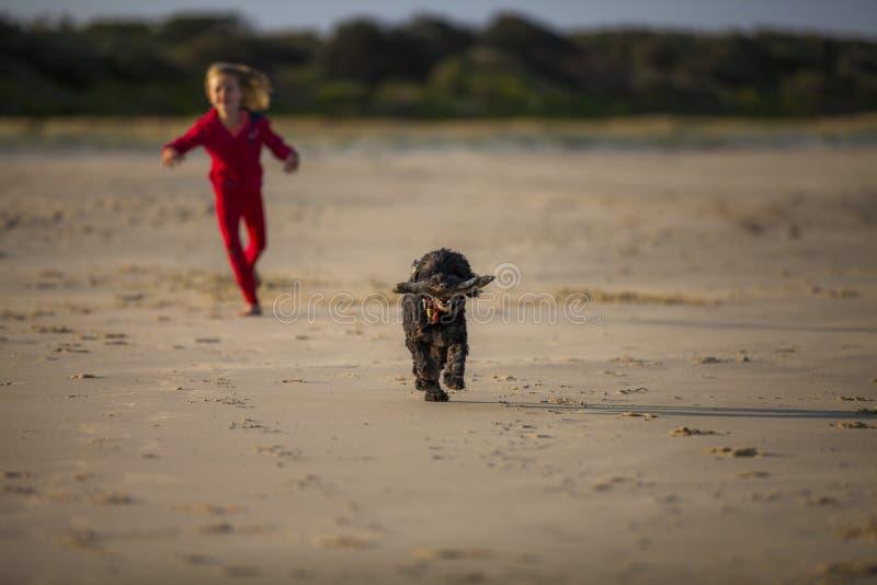 Muchacha con el perro en la playa fotos de archivo libres de regalías