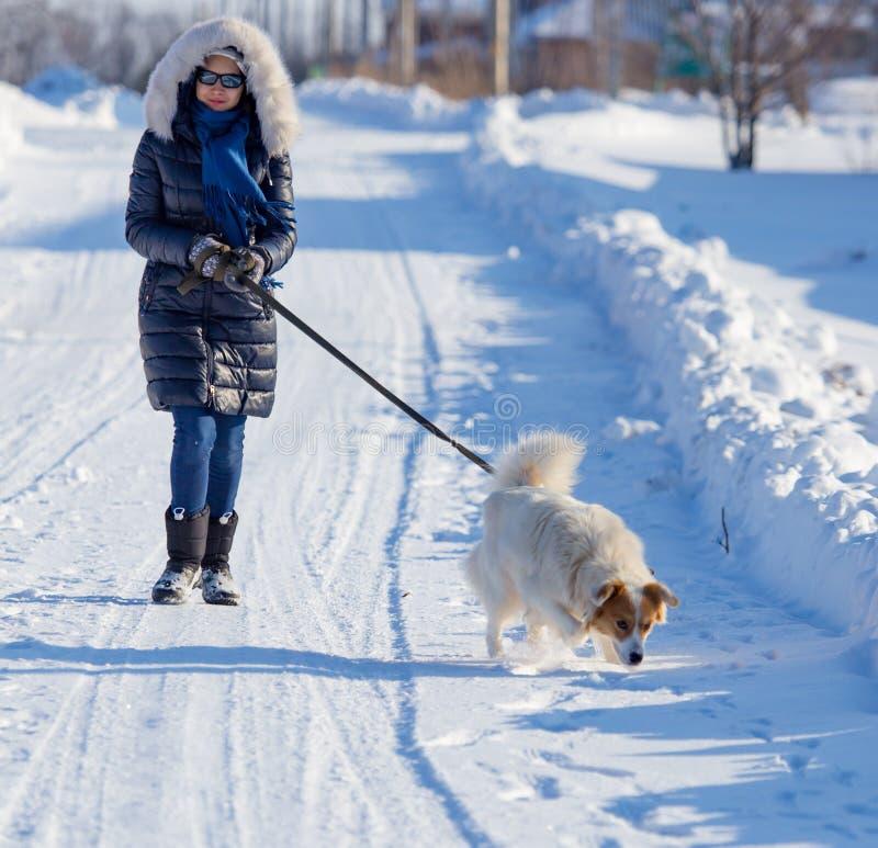 Muchacha con el perro en nieve en invierno imagen de archivo