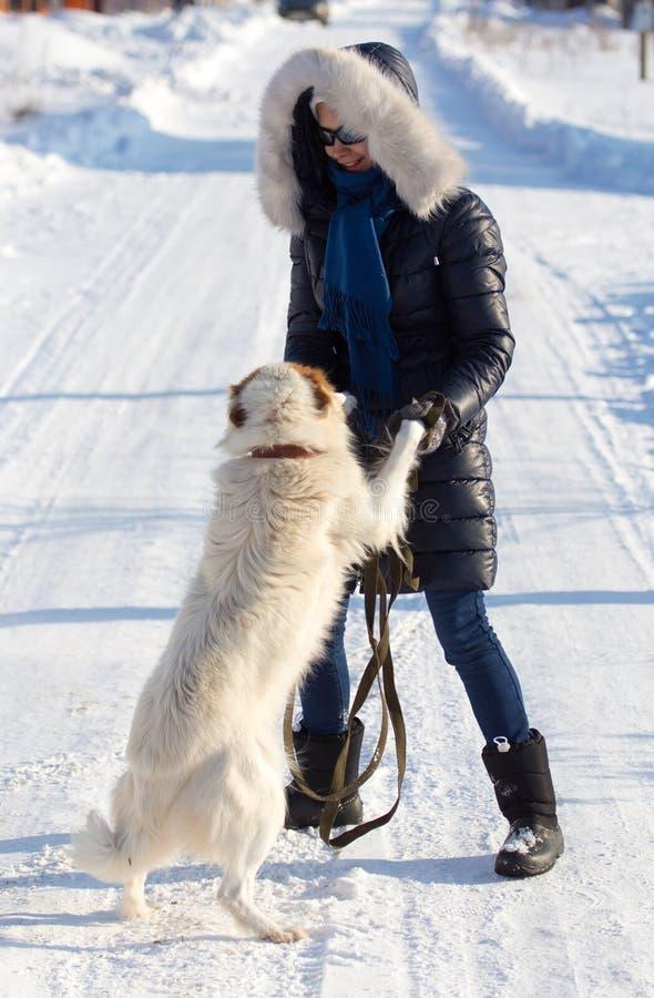 Muchacha con el perro en nieve en invierno foto de archivo libre de regalías