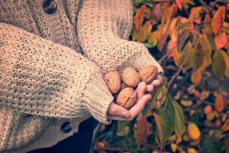 Muchacha con el suéter de lana que lleva a cabo wallnuts en sus manos imágenes de archivo libres de regalías