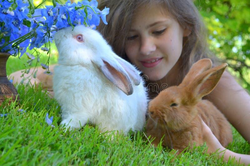 Muchacha con los conejos rojos de Nueva Zelanda y de California imagenes de archivo