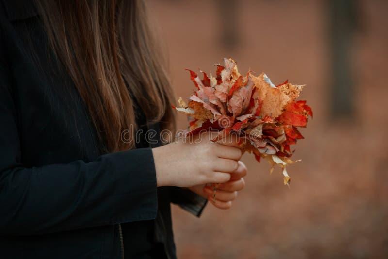 muchacha con los controles en sus hojas de arce amarillas del otoño de la mano fotos de archivo libres de regalías
