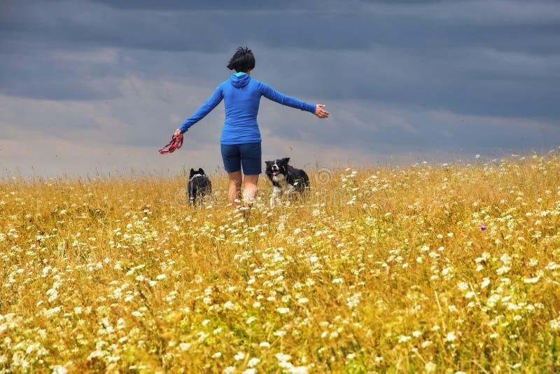Muchacha con los perros en prado foto de archivo