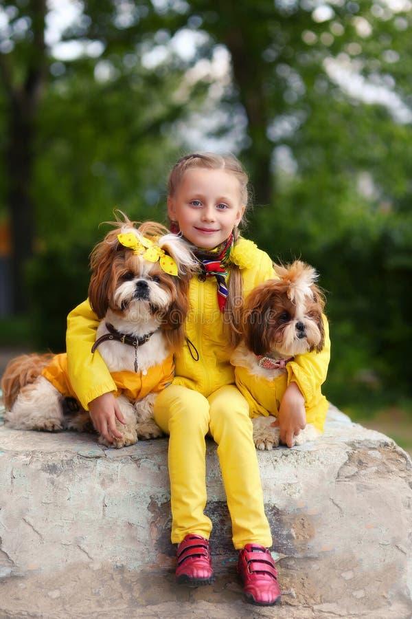 Muchacha con tzu del shih de dos perros la muchacha en la chaqueta amarilla Perros en ropa amarilla Muchacha que recorre con un p foto de archivo