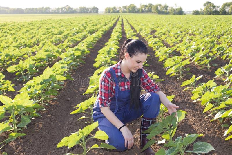 Muchacha del granjero que mira las hojas del girasol foto de archivo libre de regalías