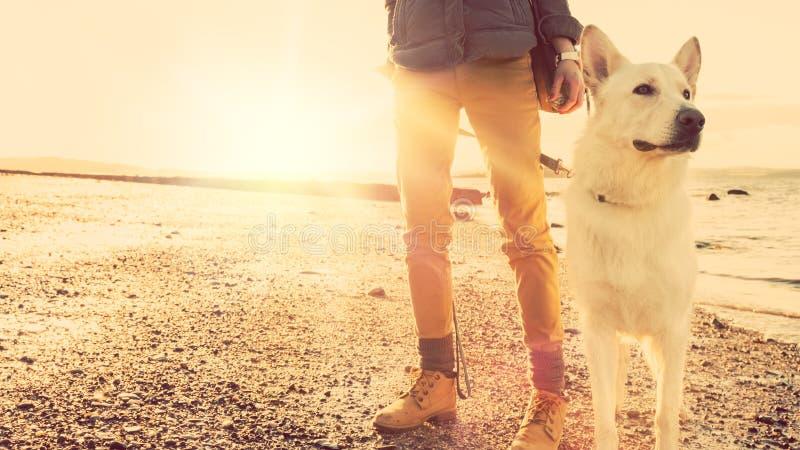 Muchacha del inconformista que juega con el perro en una playa durante la puesta del sol, efecto fuerte de la llamarada de la len foto de archivo