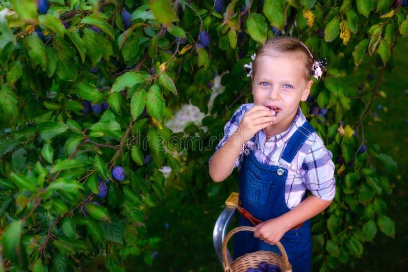 Muchacha divertida del pequeño niño con la cesta llena de ciruelos fotografía de archivo