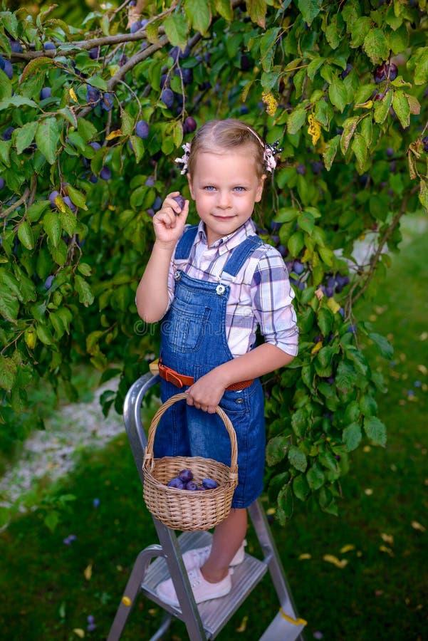 Muchacha divertida del pequeño niño con la cesta llena de ciruelos que se colocan en el th fotografía de archivo