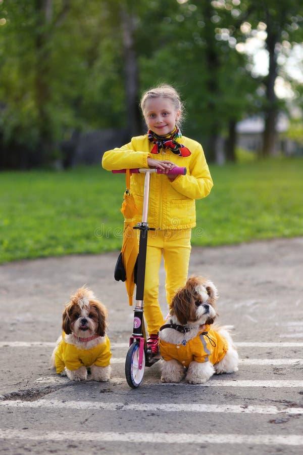 Muchacha dulce en una vespa amarilla del katatsya del vestido con los perros en el parque imagenes de archivo