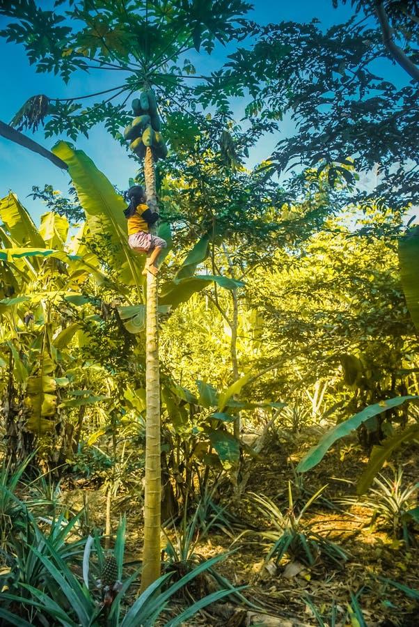 Muchacha en árbol en Bolivia imágenes de archivo libres de regalías