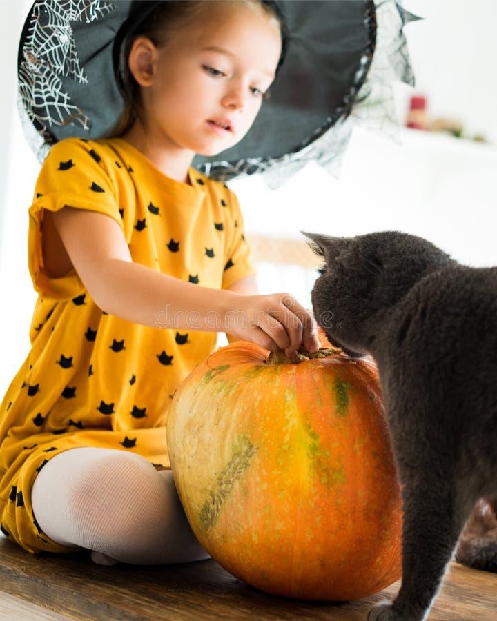 Muchacha en el traje de Halloween de la bruja que se sienta en una tabla que juega con la calabaza y su gato del animal doméstico fotografía de archivo libre de regalías