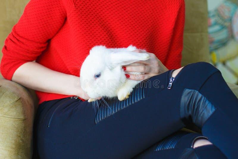 Muchacha en un suéter rojo que sostiene un conejito blanco en su revestimiento imagen de archivo