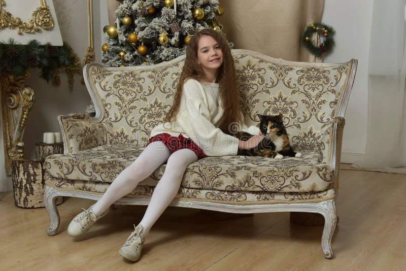 muchacha en una butaca con un gato en la Navidad fotos de archivo libres de regalías