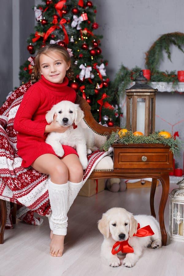 Muchacha feliz con dos golden retriever de los perritos en un fondo del árbol de navidad imagen de archivo libre de regalías