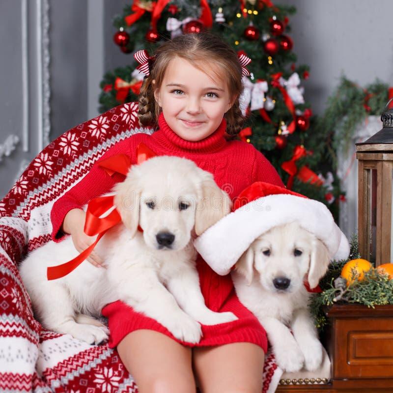 Muchacha feliz con dos golden retriever de los perritos en un fondo del árbol de navidad fotos de archivo