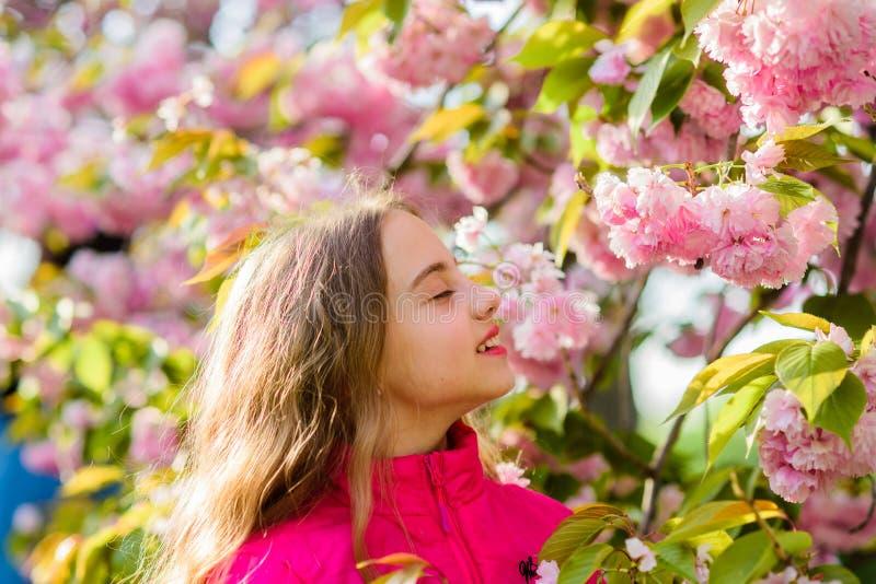muchacha feliz en flor de la cereza Floraci?n del ?rbol de Sakura Skincare Cosm?ticos naturales para la piel Silla de cubierta en imagen de archivo libre de regalías