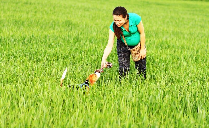 Muchacha feliz que juega con el perro del beagle foto de archivo