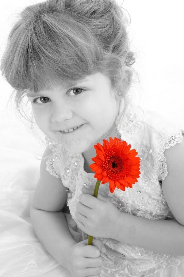 Muchacha hermosa de cuatro años que sostiene la margarita anaranjada imagen de archivo