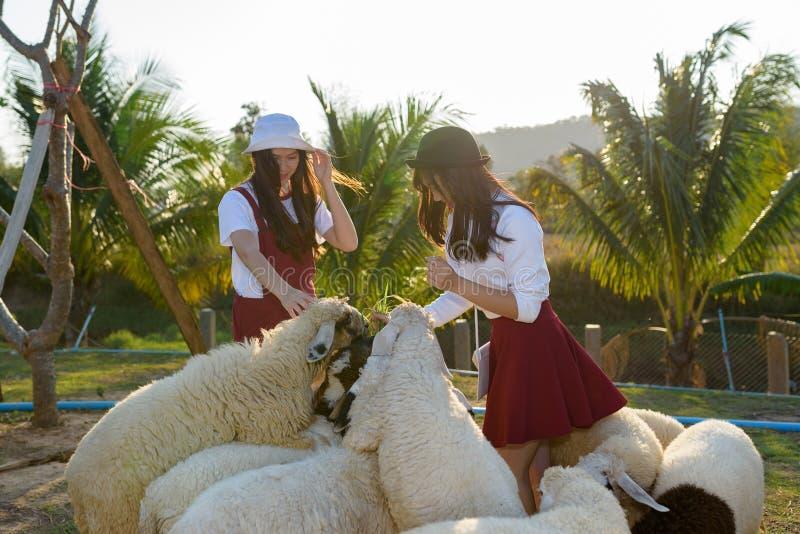 Muchacha hermosa en granja de las ovejas fotos de archivo