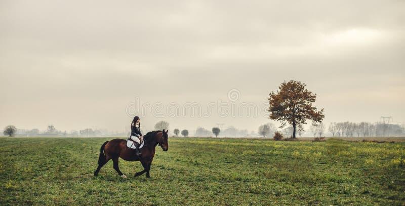 Muchacha hermosa que monta un caballo marrón imagenes de archivo