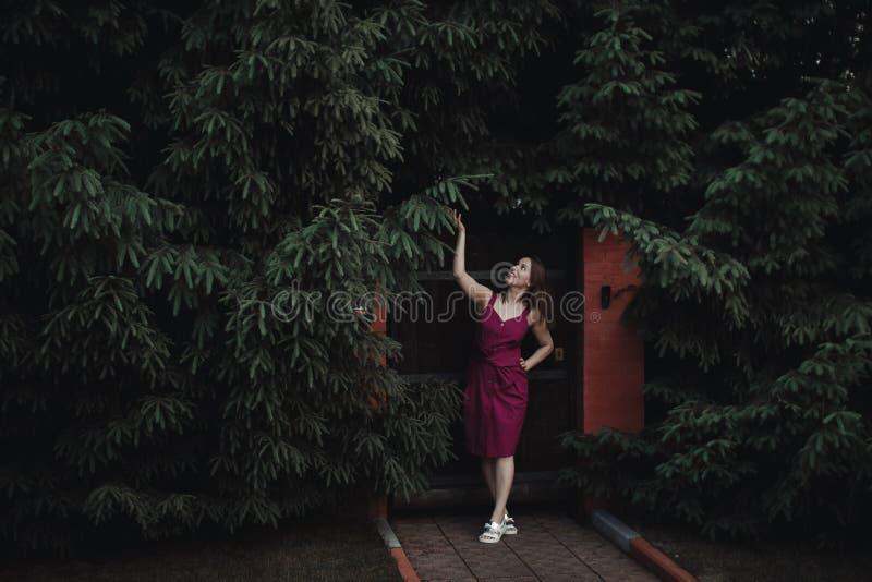 Muchacha interesante elegante en un vestido de Borgo?a contra una cerca de madera y un seto grueso de abetos Tener la diversión y imagen de archivo libre de regalías