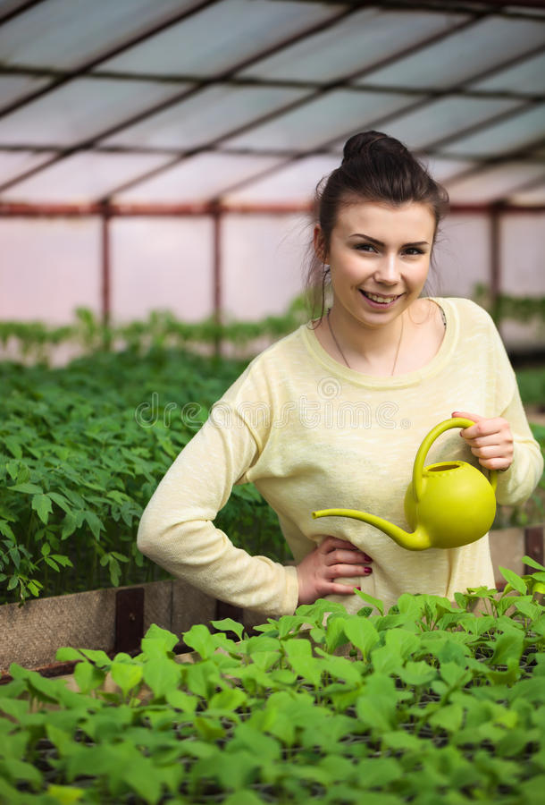 Muchacha joven del granjero que riega almácigos verdes en invernadero foto de archivo libre de regalías