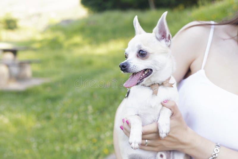 Muchacha latina con su chihuahua blanca preciosa, al aire libre fotos de archivo libres de regalías