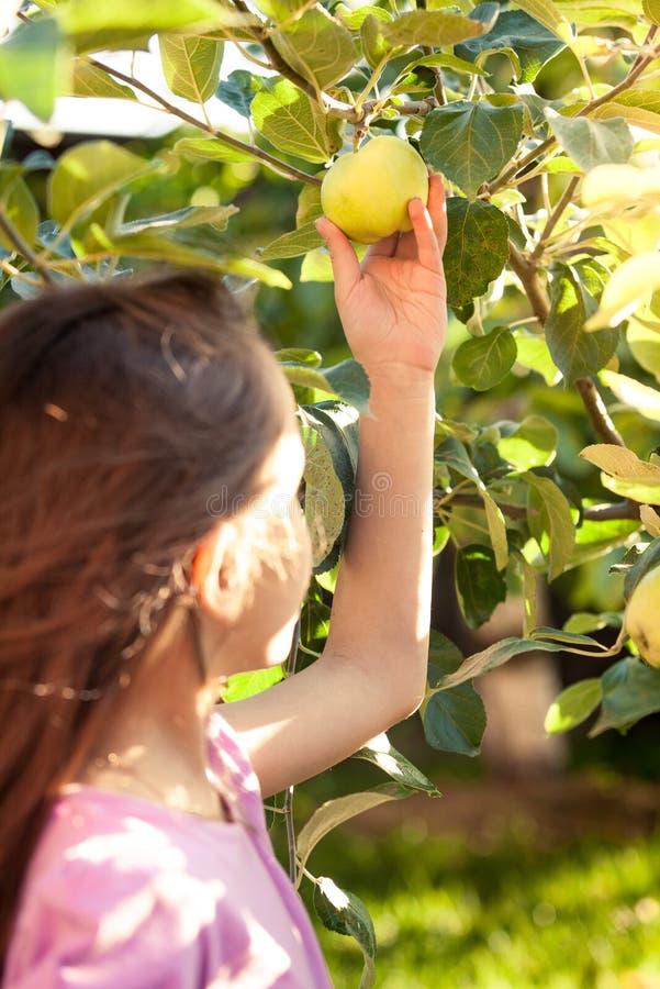 Muchacha linda que escoge la manzana verde del árbol en el jardín fotografía de archivo libre de regalías