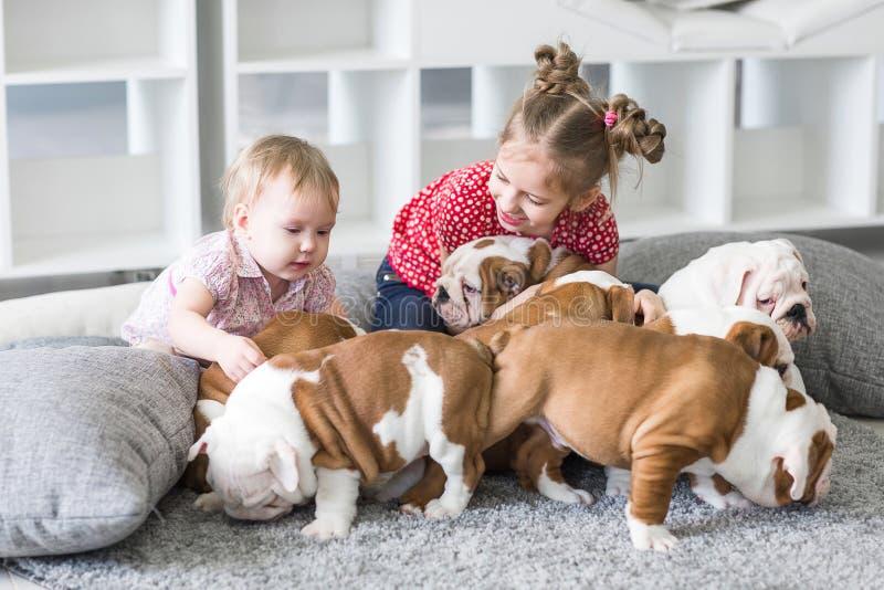 Muchacha linda que se sienta en la alfombra y que juega con el dogo de los perritos imagen de archivo libre de regalías