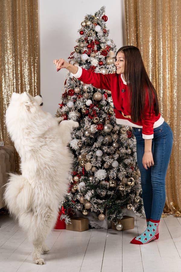 Muchacha morena hermosa en el suéter de santa que juega con el perro blanco foto de archivo