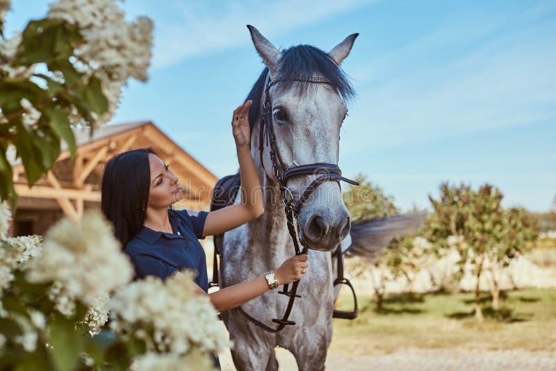 Muchacha morena hermosa que frota ligeramente su caballo gris cerca de arbustos de lila en jardín foto de archivo libre de regalías