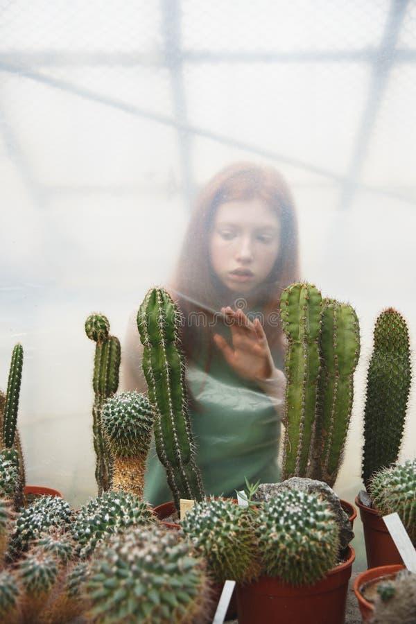 Muchacha pensativa detrás de ///que intenta tocar los cactus imagenes de archivo