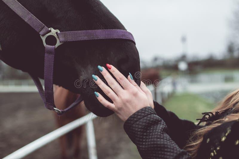 Muchacha que frota ligeramente la nariz de un caballo marrón grande imágenes de archivo libres de regalías