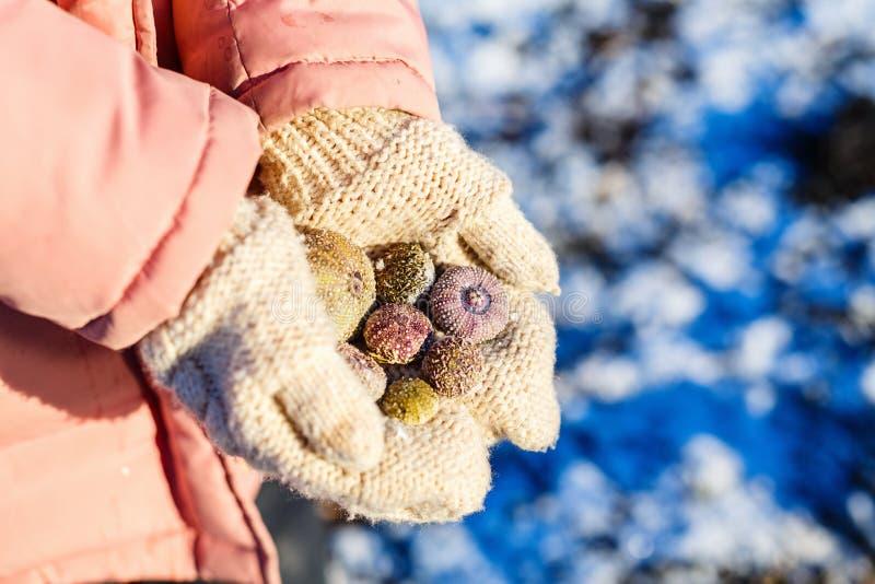 Muchacha que lleva a cabo cáscaras congeladas del mar fotos de archivo libres de regalías