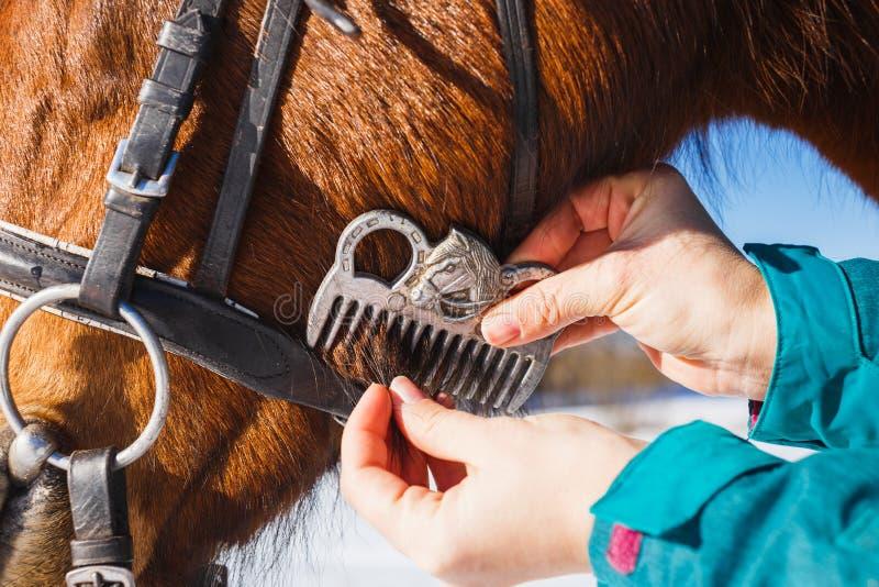Muchacha que peina la melena negra del caballo con un peine fotos de archivo libres de regalías