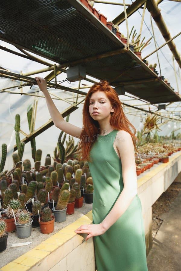 Muchacha que se sienta en estante con los cactus imagenes de archivo